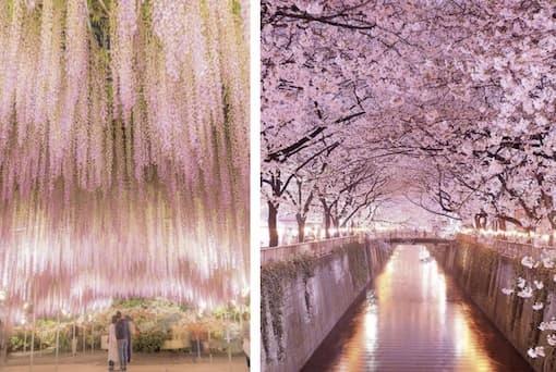 parc Ashikaga près de Tokyo